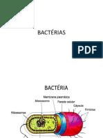 AULA 5 Bactérias
