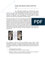 Functional Anatomy and Muscle Action of the Foot
