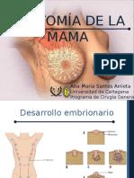 anatomiayfisiologiademama-160603034629