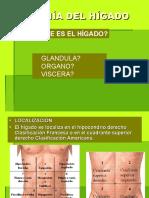 Anatomiadelhigado 101030094813