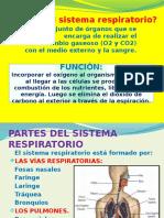 Sistema Respitario Humano y Abejas