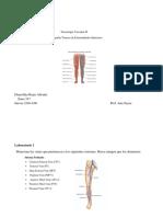 manual del lab