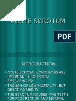 Scrotum Ppt