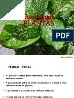 INTOXICACAO POR PLANTAS.pdf