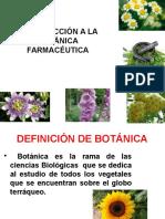BOTANICA CLASE 1.pptx