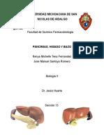 Pancreas, Higado y Bazo
