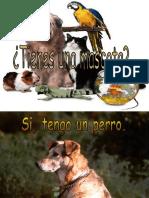 Spanish Pets MP