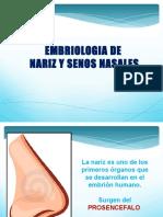 Embriologia de Los Senos Nasales