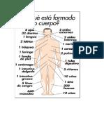 Partes Del Cuerpo Humano