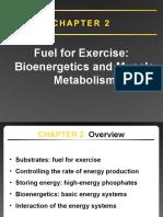 2. Bioenergetics