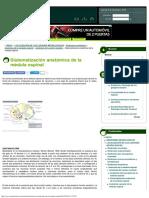 Sistematización Anatómica de La Médula Espinal _ NeuroWikia