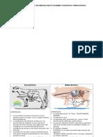 Tabla Comparativa Del Sistema Digestivo de Un Animal Poligástrico y Monogástrico