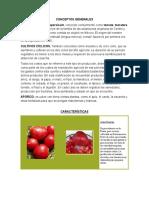 Conceptos Generales Del Tomate