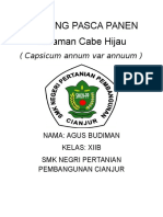 Keliping Cabe Hijau