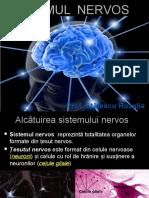 Sistemul nervos - alcătuire