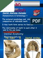 64288110 Dental Anatomy Intro