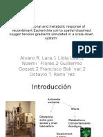 Transcriptional and Metabolic Response of Recombinant Escherichia Coli
