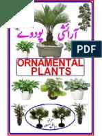 Ornamental Plant urdu