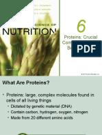 Gizi Protein