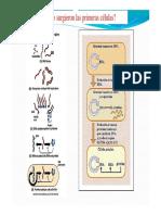 Origen de Las Primeras Celulas y Teoria Endosimbiotica.ppt (1)