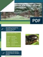 PHT Kumbang Tanduk - Kelapa Sawit