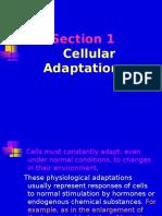 CellularAdaptations