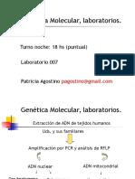 Extracción DNA