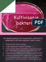 kultivisanje-bakterija
