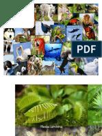 Animales y Plantas en Peligro de Extincion