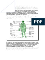El Sistema Nervioso.docx Arturo