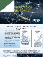 COMUNICACIÓN NEURONAL-diapos Monografia Miguel Zapata