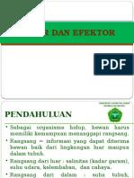 Reseptor Dan Efektor