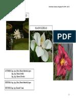 3Angiospermasbasales-Magnolideas-Monocotiledoneas