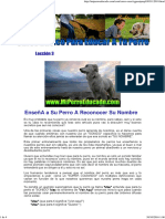 Curso Basico de Adiestramiento Canino