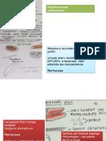 52161408-contoh-mikroskopik-simplisia.pptx