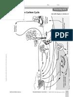 carbon_cycle.pdf