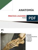 Anatomã-A Practico 1 Imagenes