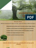 Valoarea Unui Arbore