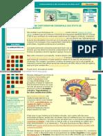 Vers Une Cartographie Cérébrale Des États de Conscience