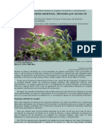 Plantas Prohibidas Cofepris Nota Periodico