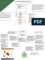 Sistema Endocrino Y Generalidades de Hormonas.
