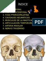 Fosas del cráneo