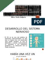 Desarrollo Embrionario Del Sistema Nervioso Humano