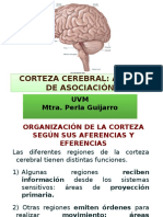 12a_Áreas de La Corteza Cerebral