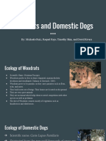 woodrats and dogs-2
