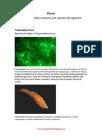 Diagnstico e Tratamento Peixes