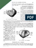 Tratado de Anatomia Humana Quiroz Tomo I_187