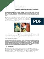 Obat Penyakit Liver Bengkak de Nature Indonesia