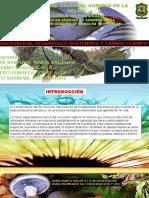 DESARROLLO-SOSTENIBLE.pptx702906723