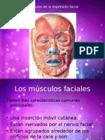 musculos faciales - Anatomia